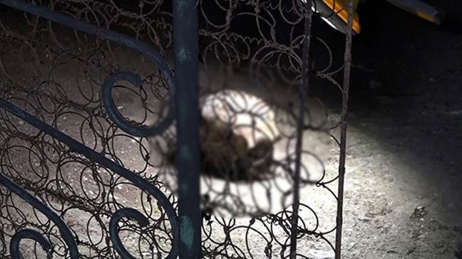 Son dakika haberleri... Antalya'da korkunç olay: Bahçede insan kafatası bulundu