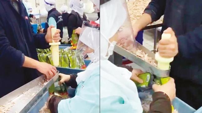 Ton balığını çıplak elle paketlediler! Sosyal medyada tepki yağdı