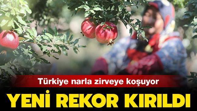 Türkiye narla zirveye koşuyor: İhracatta yeni rekor kırıldı.