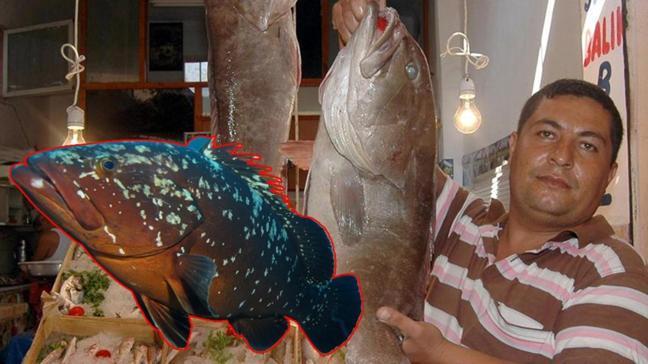 """Lagos balığının fiyatı ne kadar"""""""