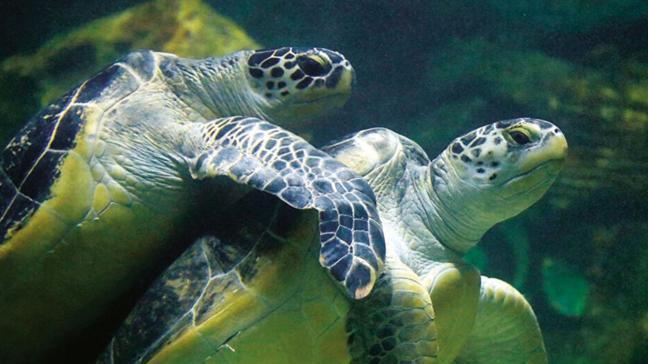 Deniz kaplumbağası yiyen 19 kişi öldü