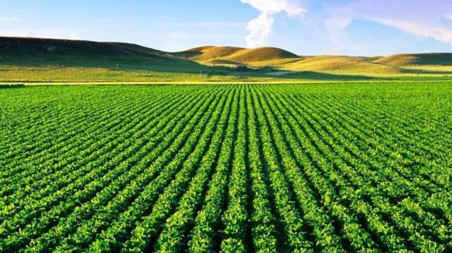 Amasya Merkez'de tarım arazisinin icradan satışı yapılıyor!
