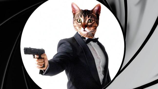 Sovyetlere karşı casus kediler
