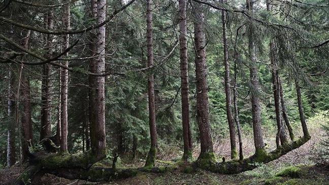 2 ağaç kestiler, ceza olarak 200 fidan dikecekler
