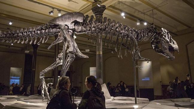 """Yapılan araştırmada ortaya çıktı... """"T-Rex"""" dinozor türünün sanılandan oldukça yavaş yürüdüğü belirlendi"""