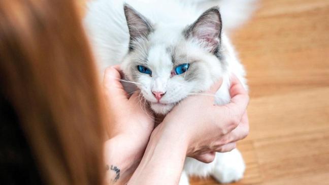 İlk kez bir kedi koronavirüsten öldü