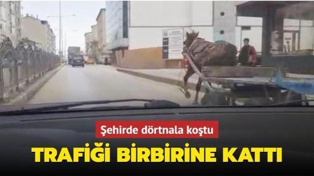 Erzurum'da sahibinden kaçan at trafiği birbirine kattı