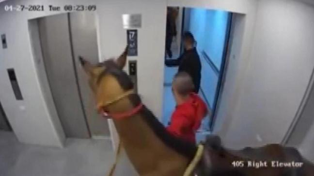 Akılalmaz görüntü: Asansöre at sokmaya çalıştılar