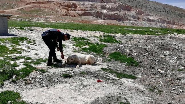 Kahramanmaraş'ta kısıtlamada sokak hayvanları unutulmadı
