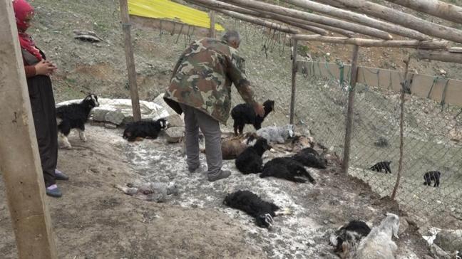 Köpek saldırısıyla 20 keçi telef oldu
