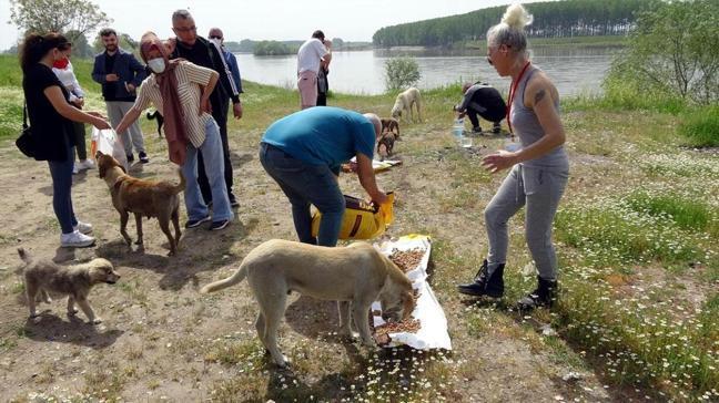 Edirne'de kısıtlamada sokak hayvanları unutulmadı