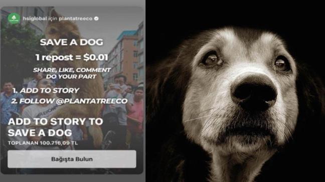 """Instagram'da save a dog  kampanyasına bağış nasıl yapılır"""" Save a dog bağışı nedir, ne demek"""""""